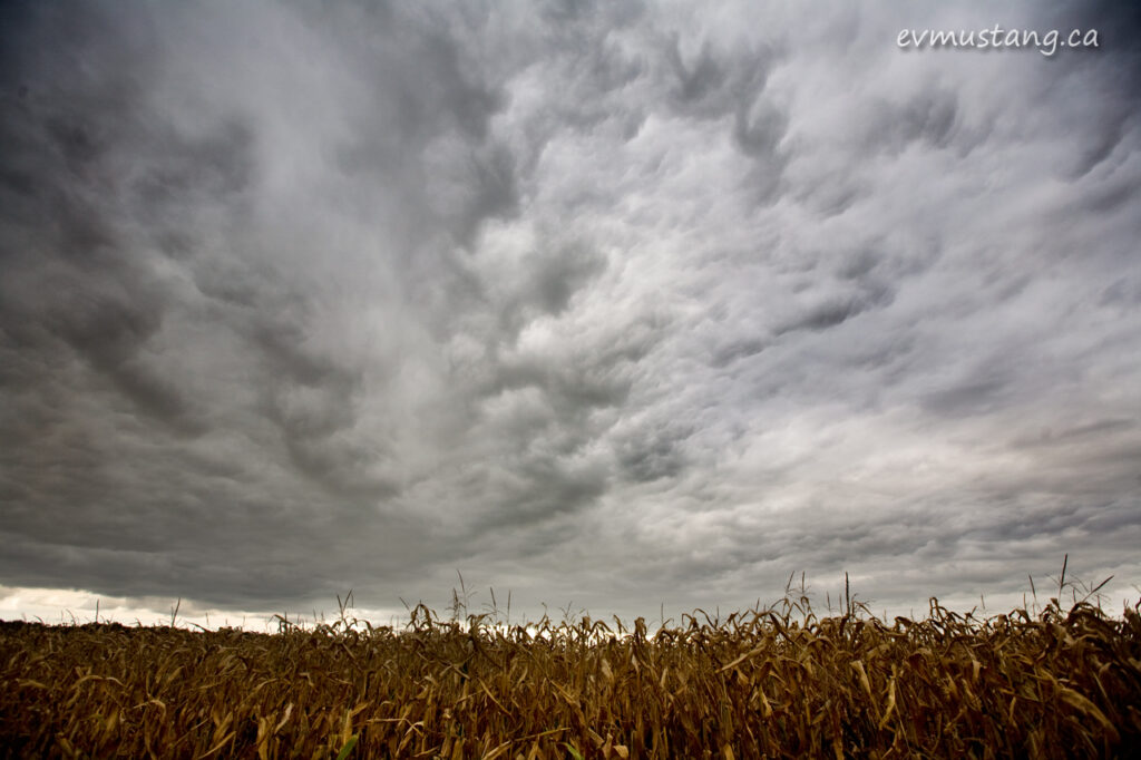image of dramatic clouds over golden cornfield