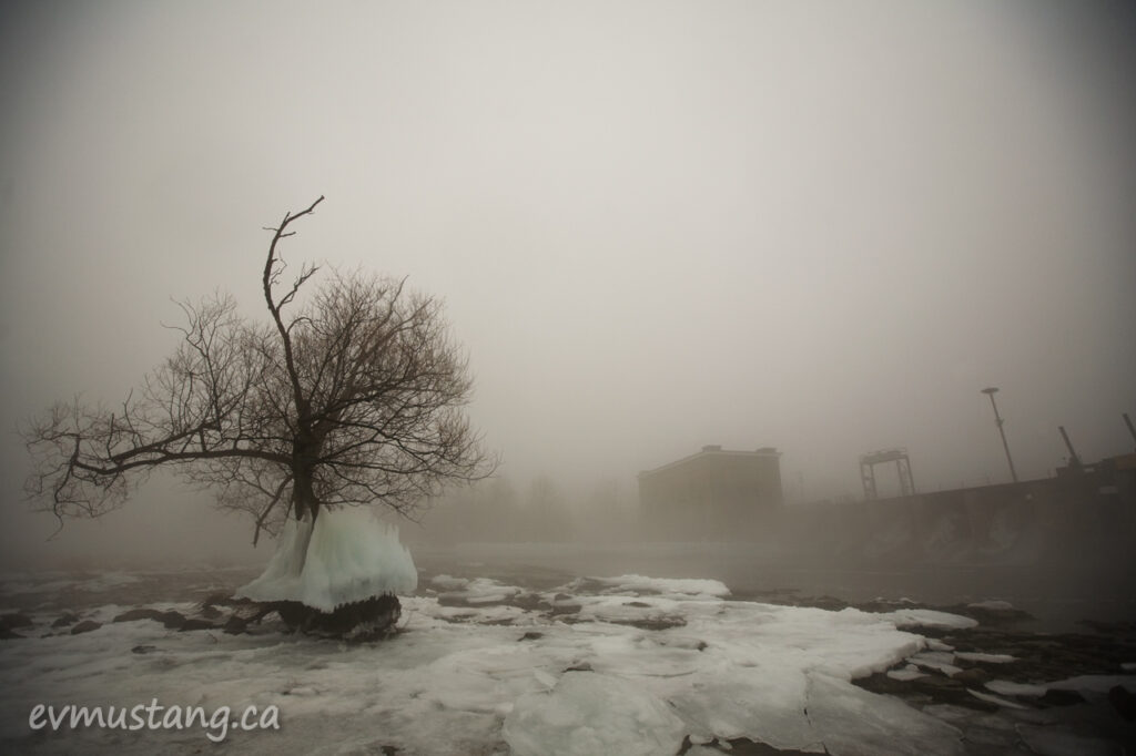 image of large ice skirt around a tree