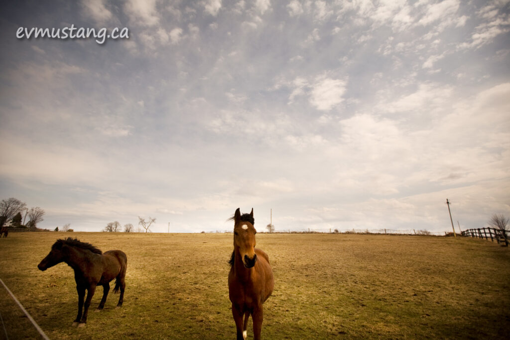 image of two horses in a field