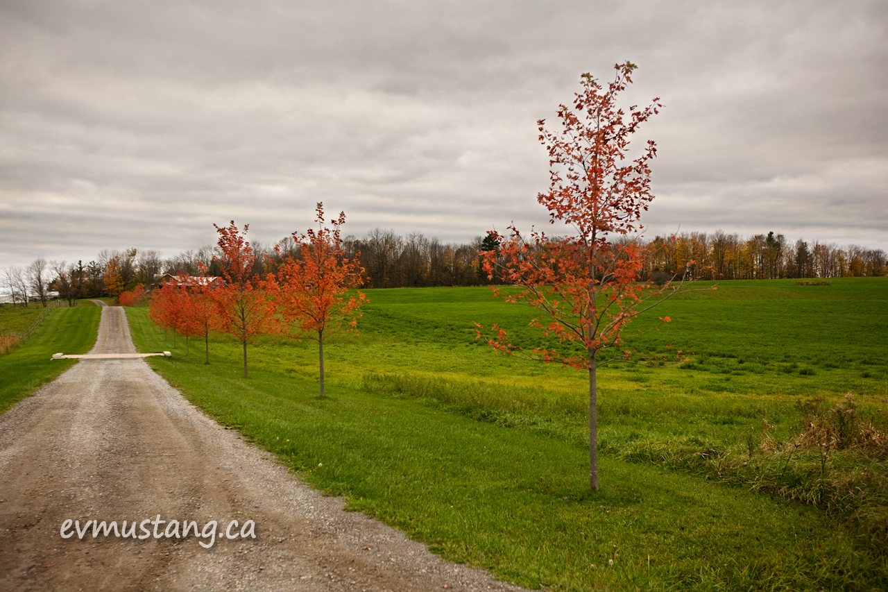image of red trees against a green field