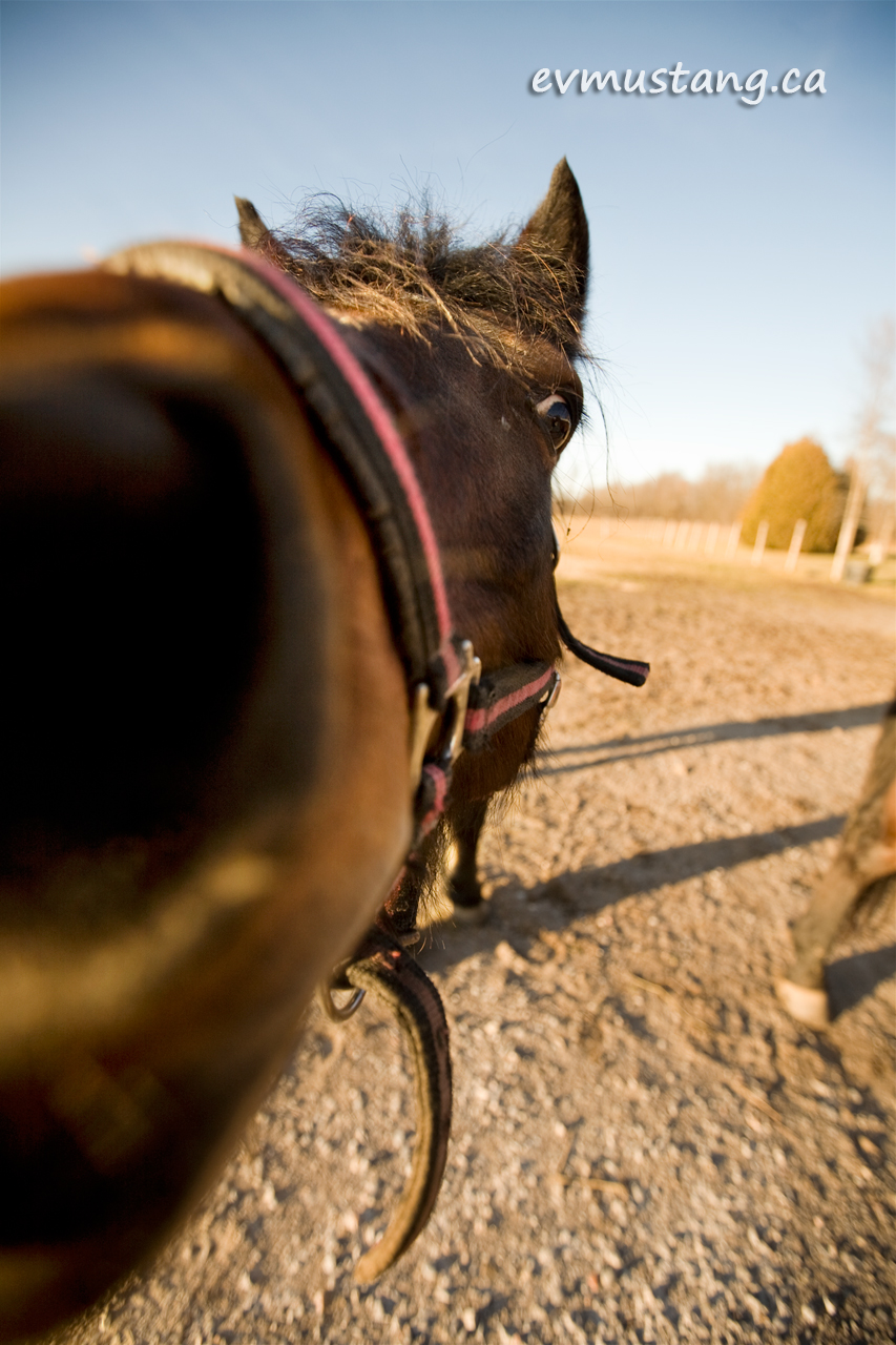 image of horse with long nose looking into the camera