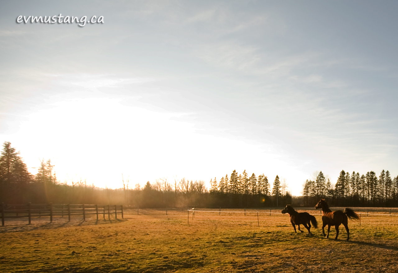 image of horses running into a sinking sun under a blue sky