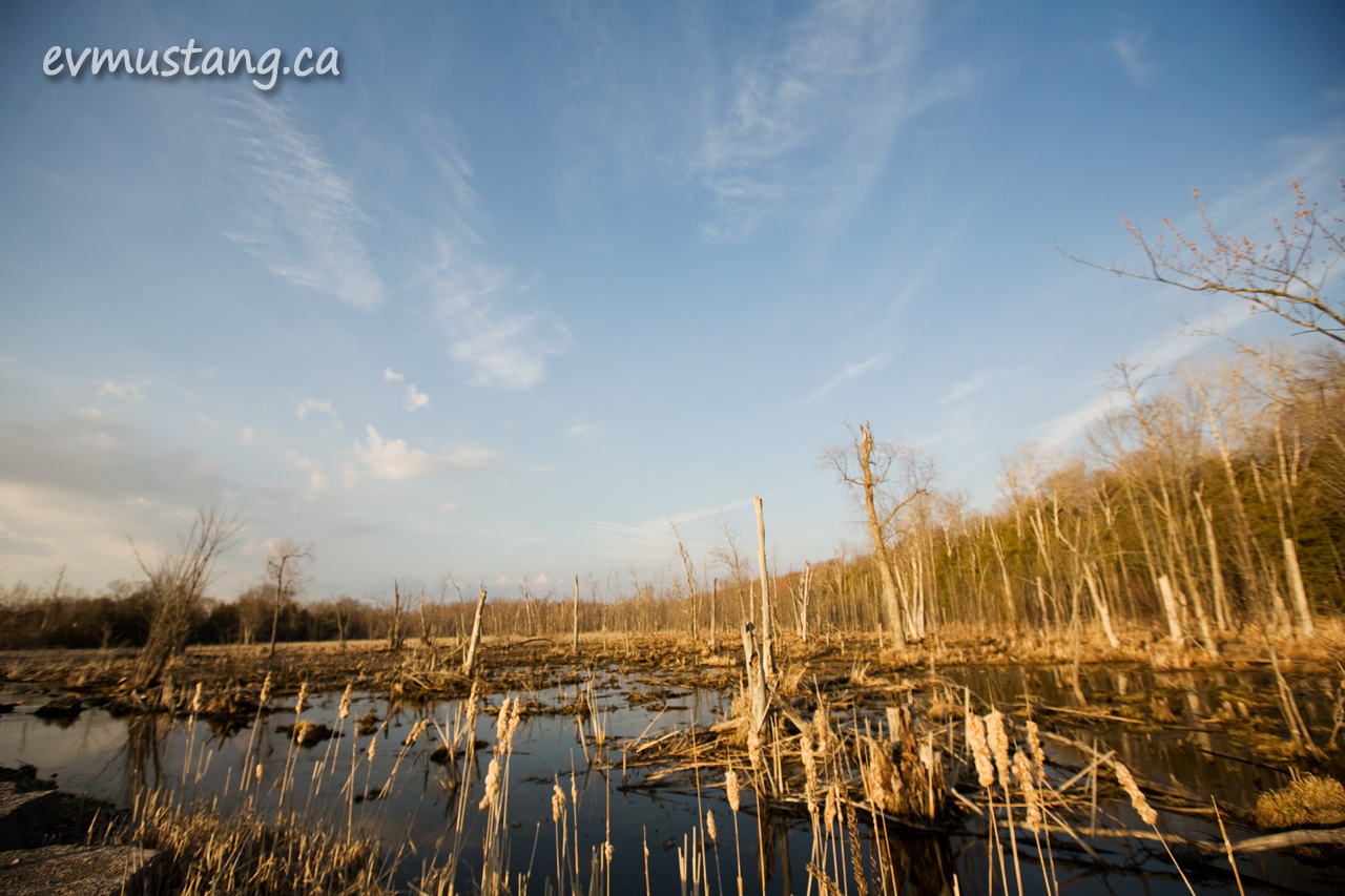image of marsh in spring