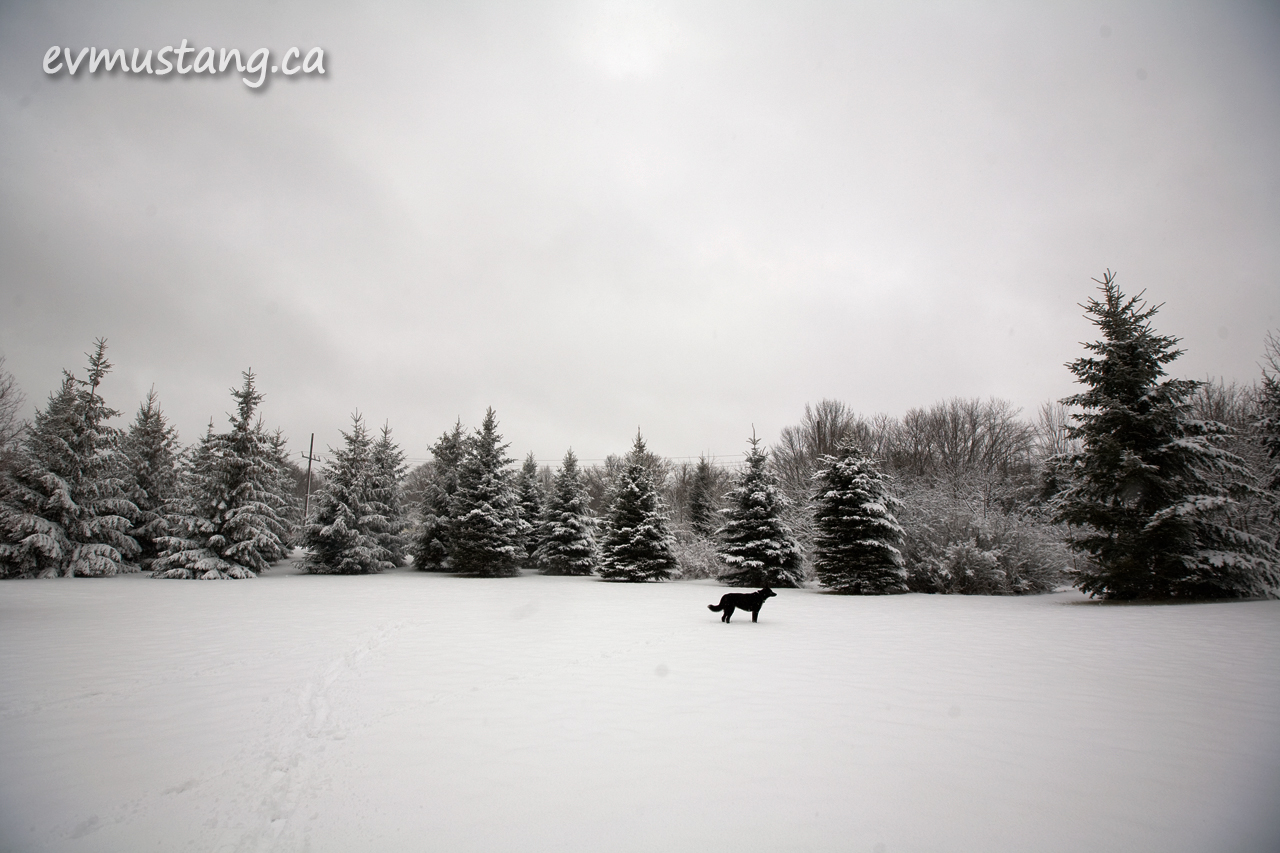 image of dog in snow