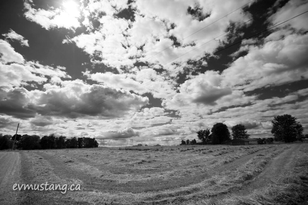 black and white image of newly mown hay