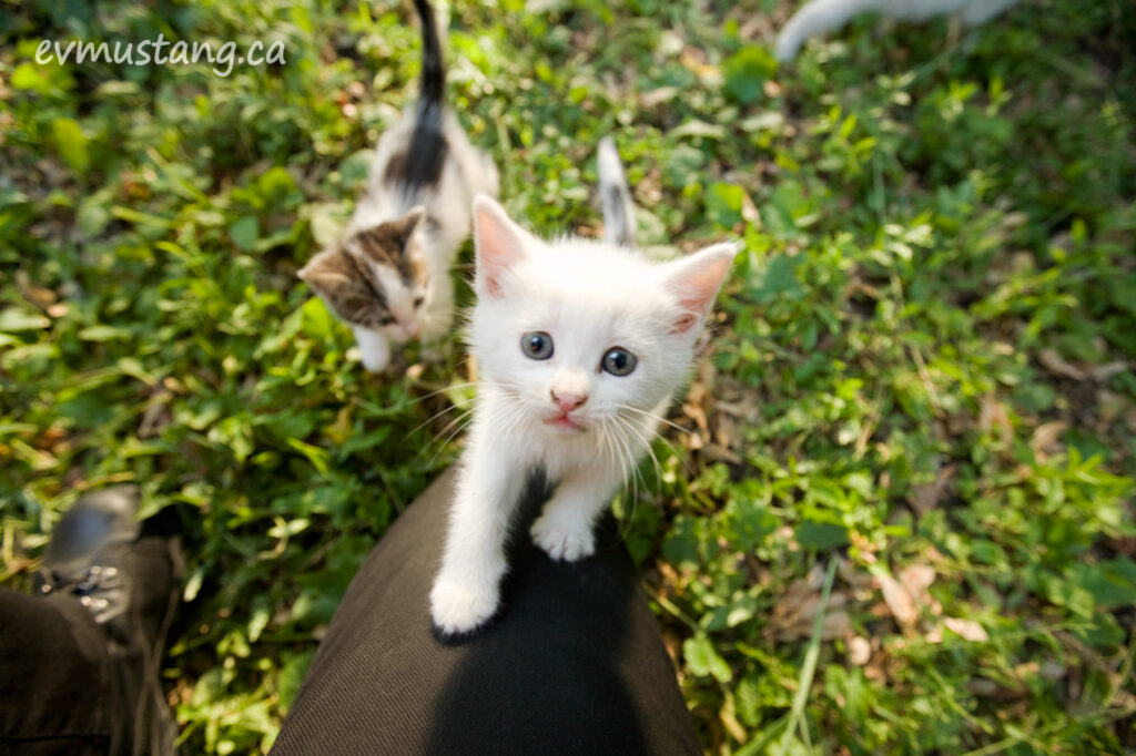 image of kitten climbing up toward camera