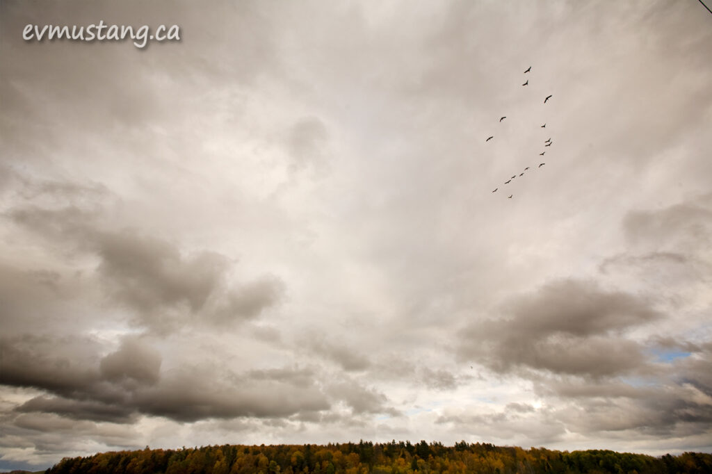 image of a flock of geese over an autumn landscape