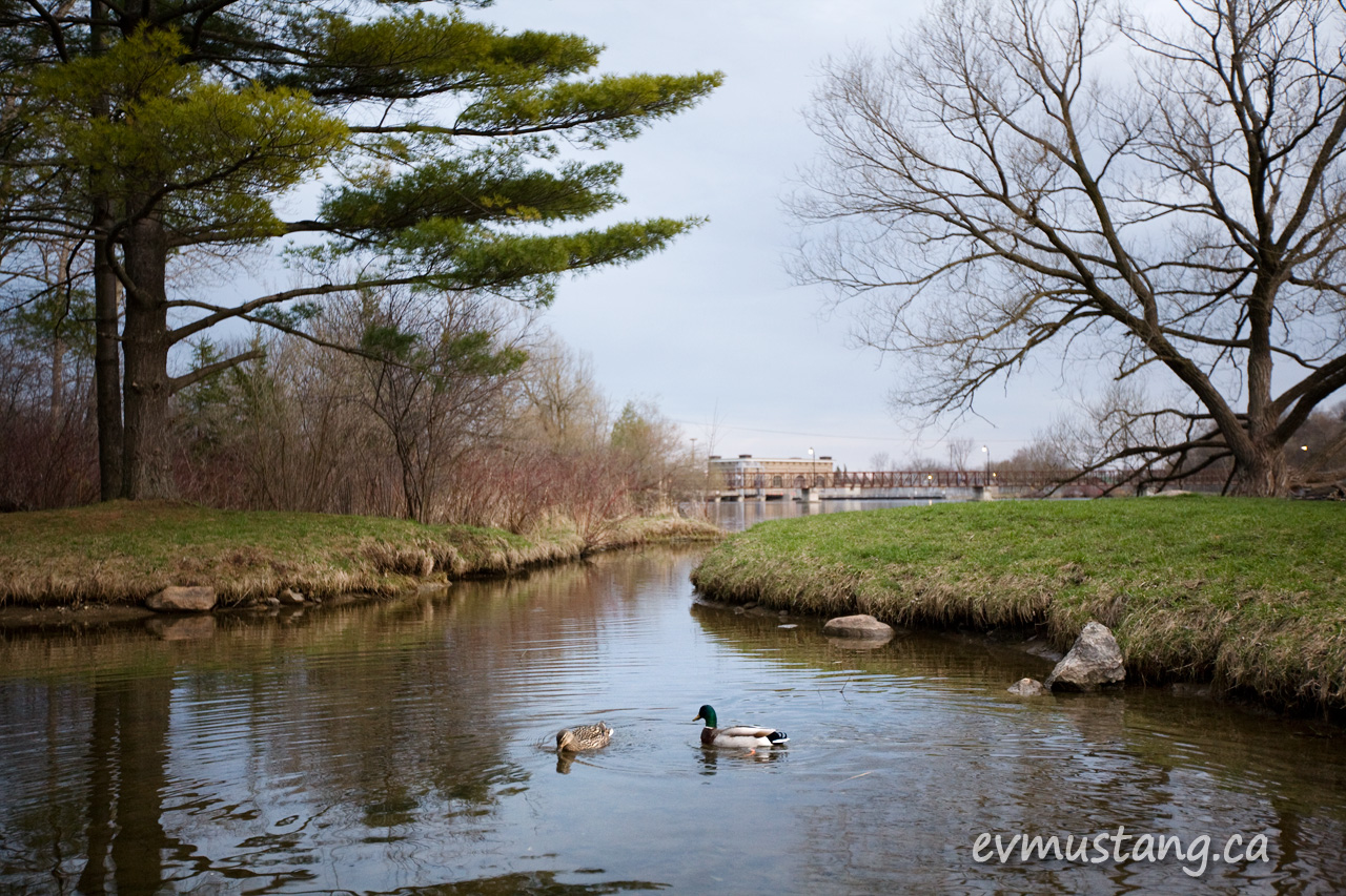 image of ducks in sheltered inlet