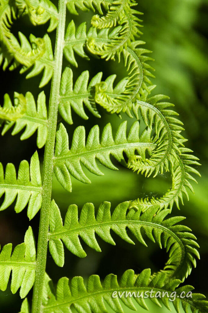 close up image of fern frond