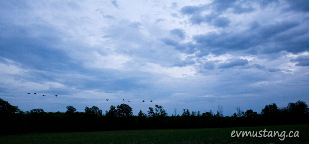 image of geese flying past dark clouds