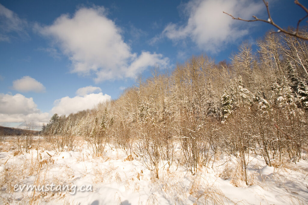 image of winter forest scene