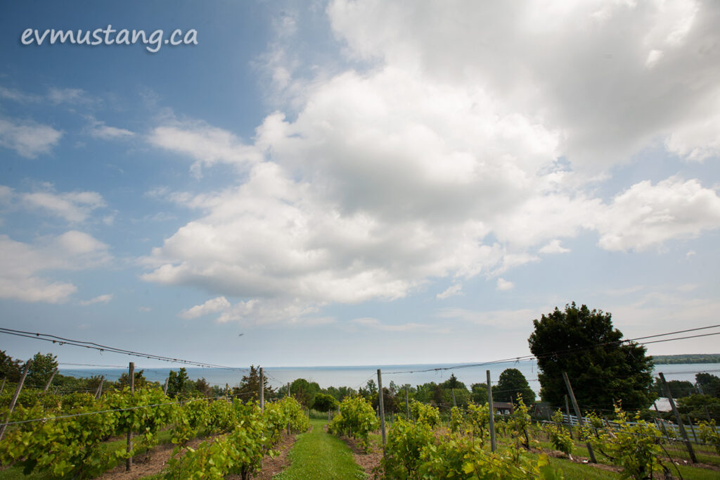 image of lake ontario behind county cider comany vinyard
