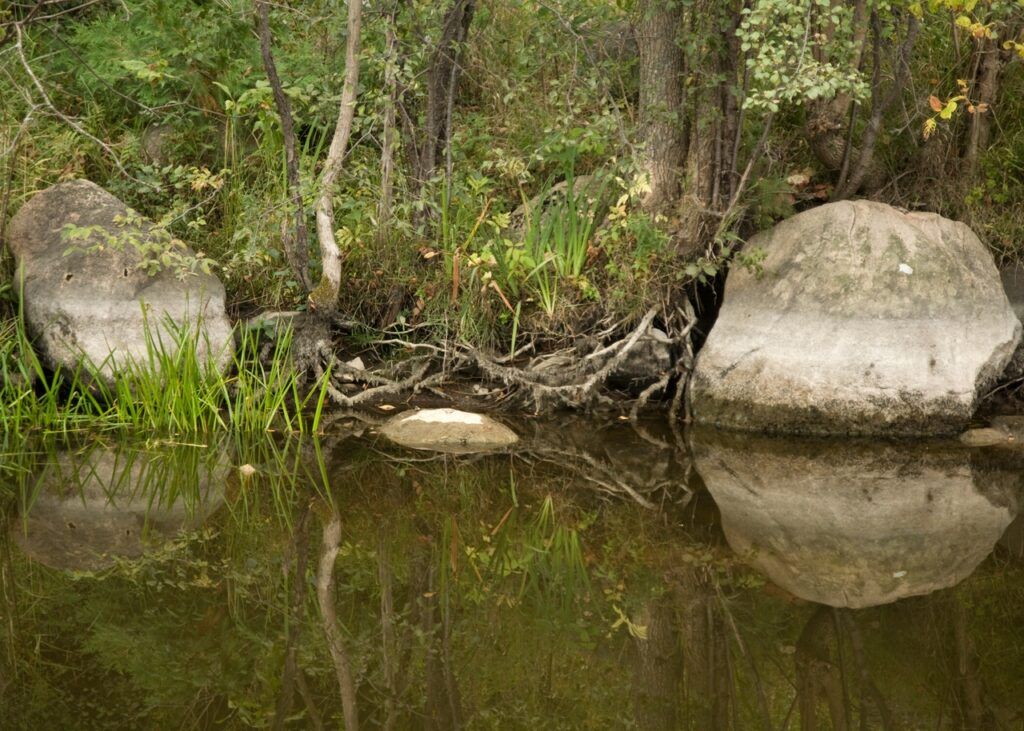 image of forest reflected in river