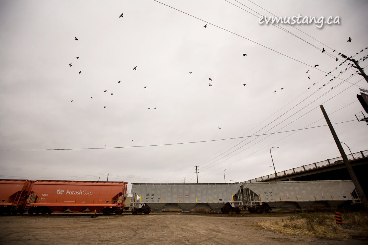 image of pigeons flying over a freight train under a cloudy sky in London, Ontario