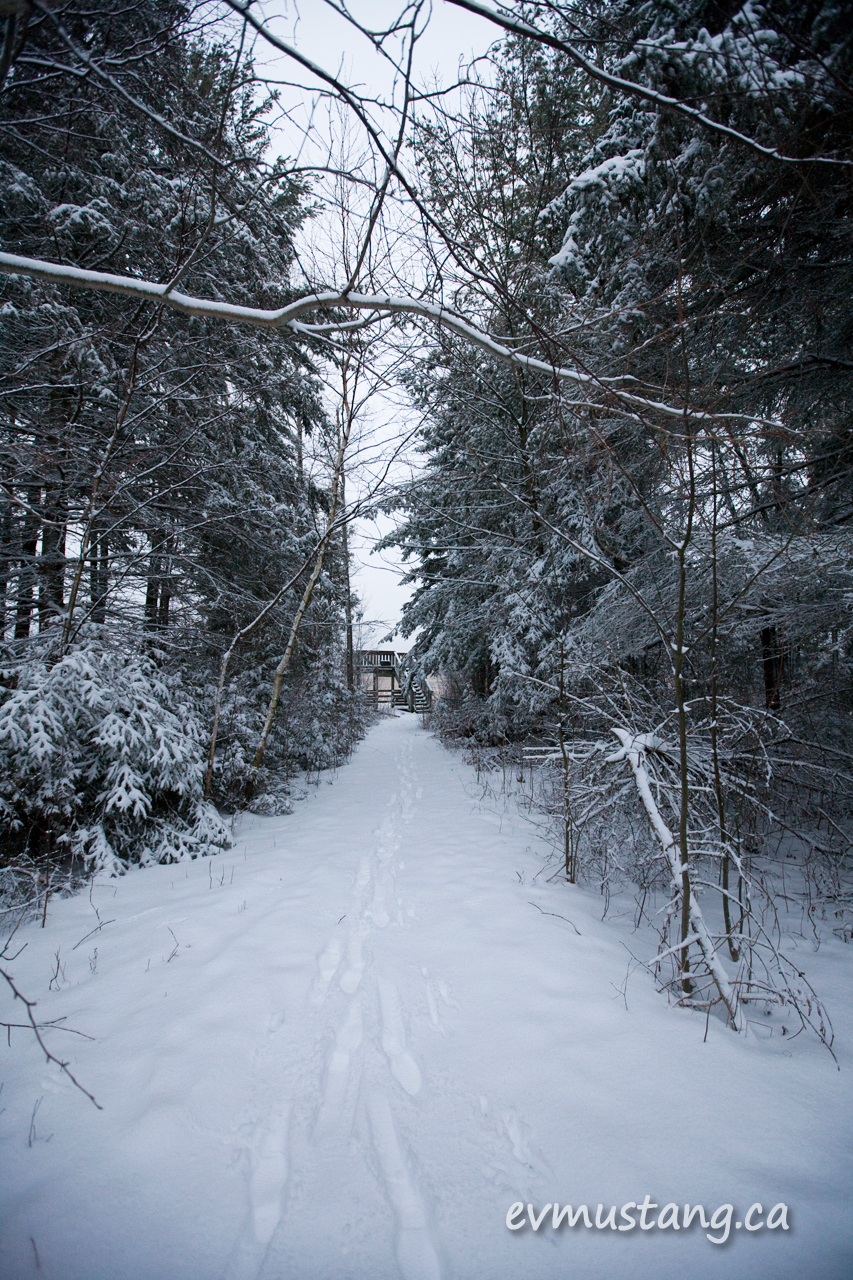 image of snow cover path through woods to observation platform
