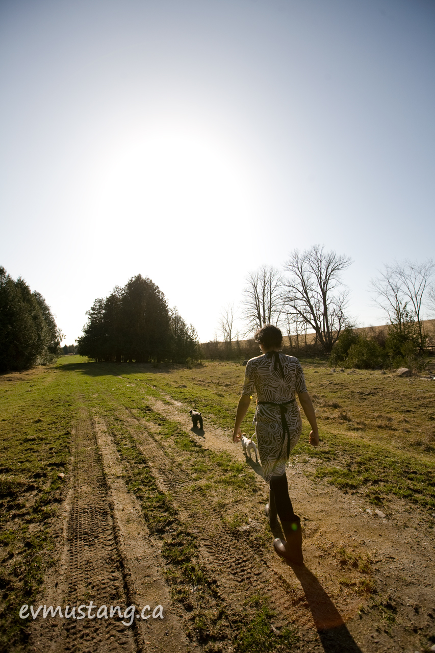 image of woman walking small dogs through field