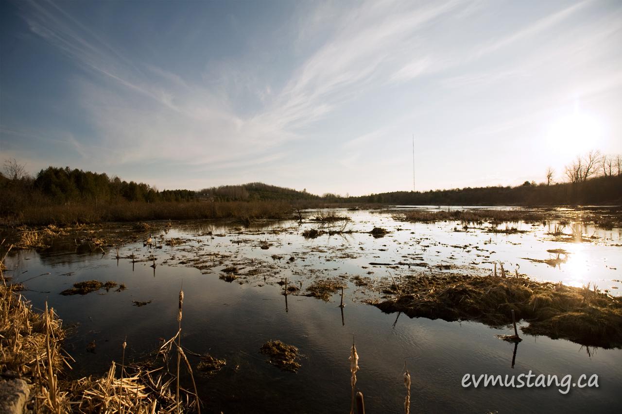 image of marsh in spring