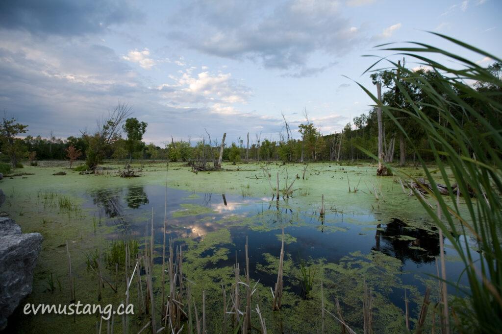 image of marsh in Peterborough, Ontario