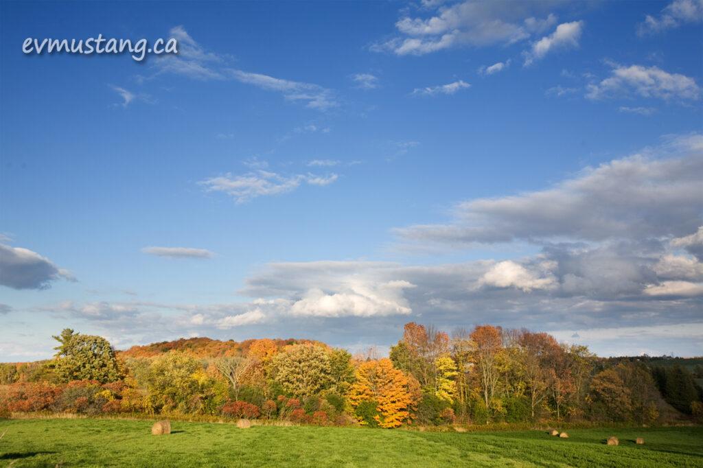 image of colourful autumn trees