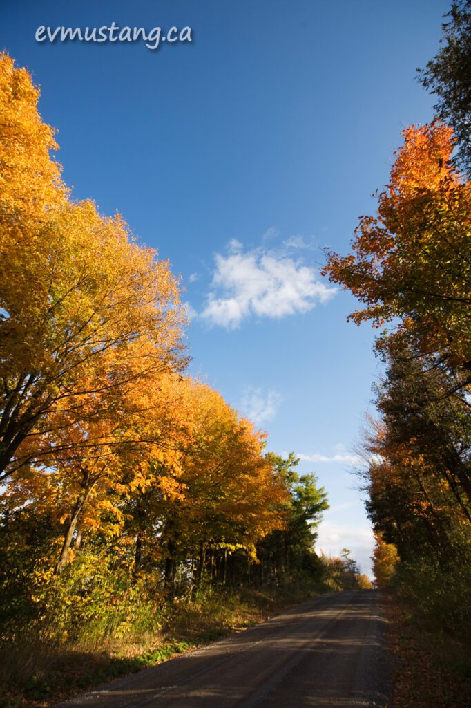 image of country road in autumn colours
