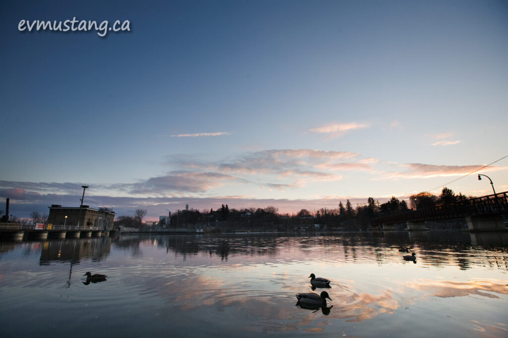 image of ducks on the otonabee river at sunset