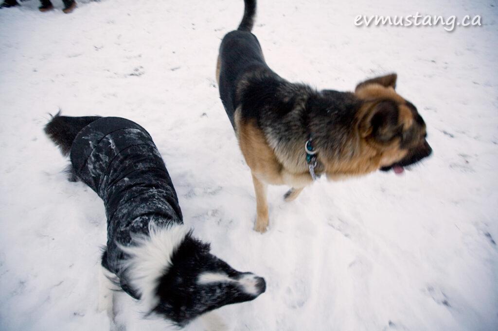 snowdogfight01