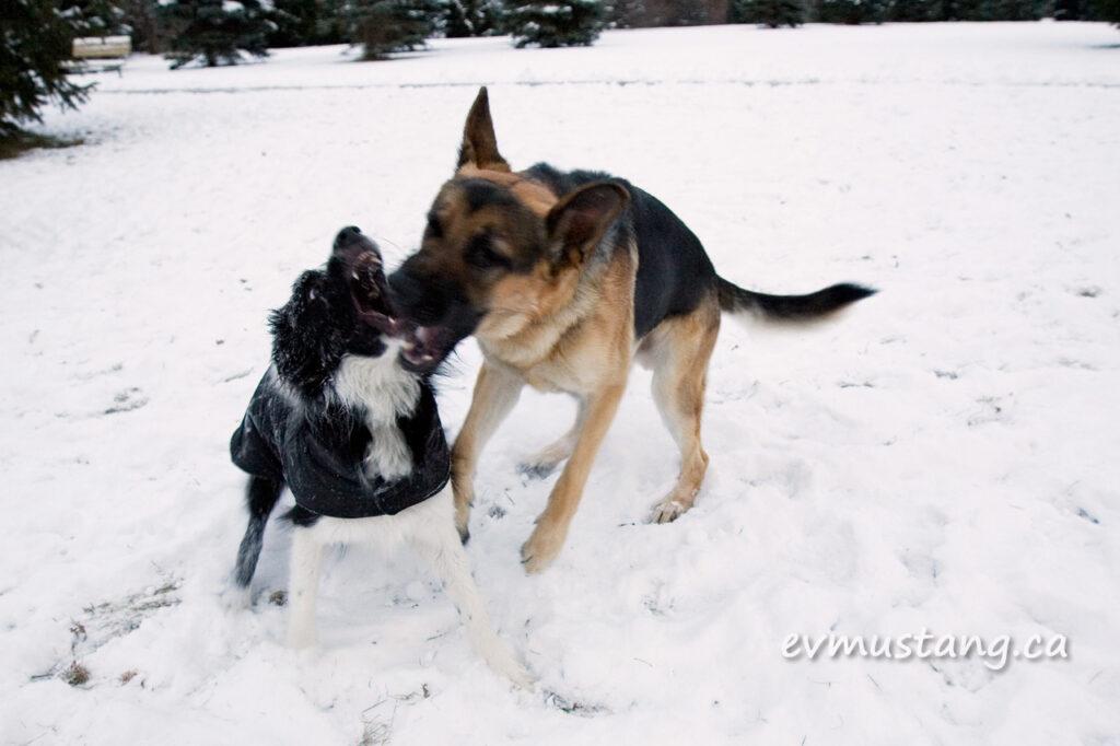 snowdogfight02