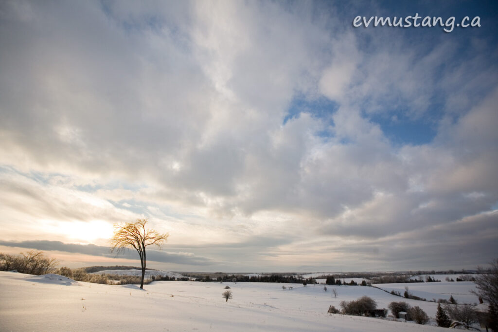 image of a lone tree in an icy landscape