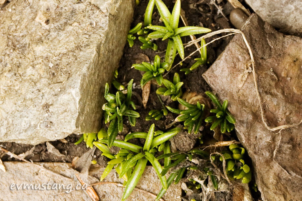 image of star of bethlehem coming through rock path