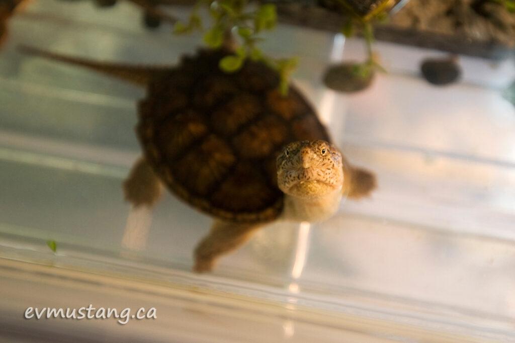 turtles08