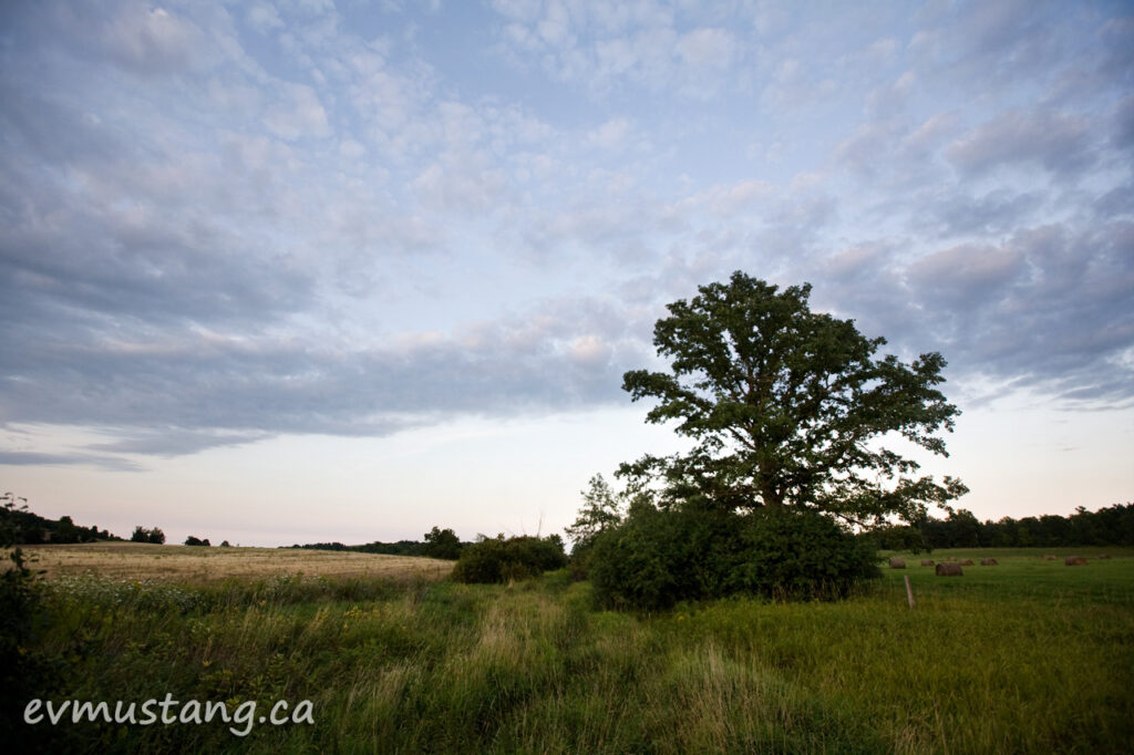 image of lone tree next to a stream filled with long grasses