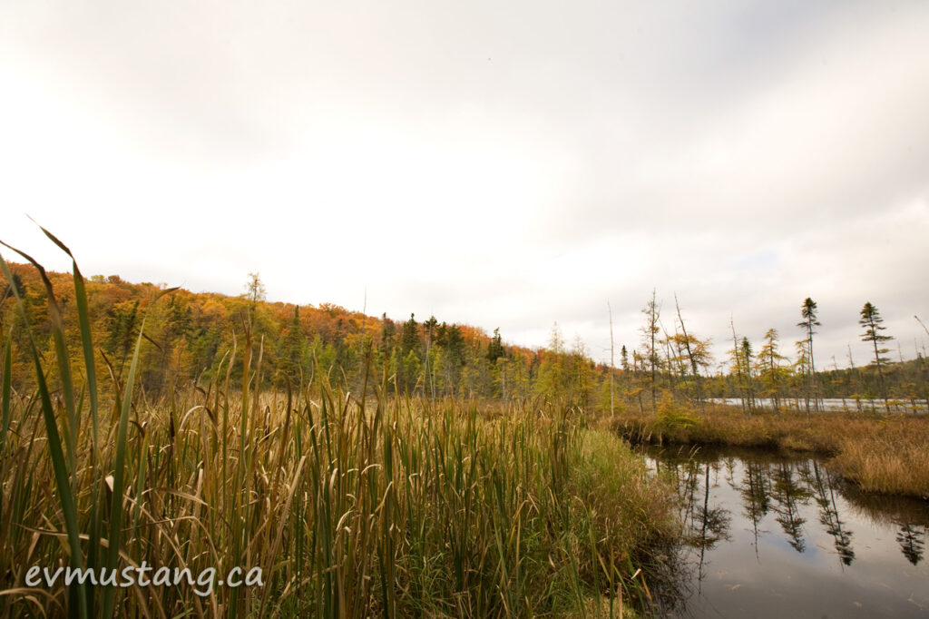 image of marsh in hastings county, ontario during fall