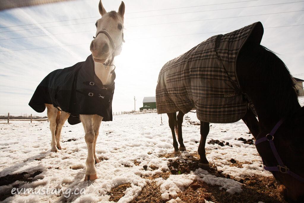 spring_horses2